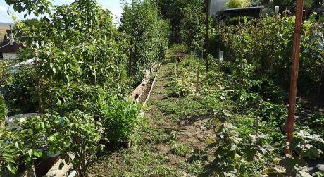 záhradka s chatkou, Holíč