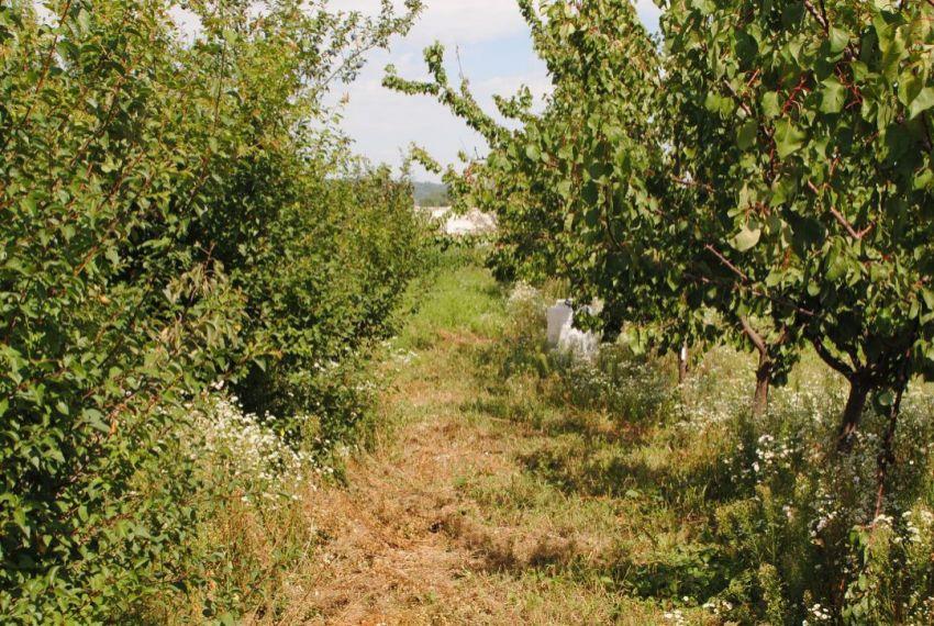 Predaj ovocné sady Žemliare-2