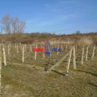 Obrábaný vinohrad Škridláky medzi Pezinkom a Limbachom - 26 árov