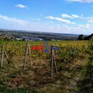 Obrábaný vinohrad 19 árov v Modre, lokalita Dolné Grefty,