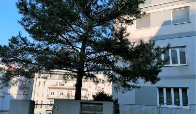 Prenájom – 3 izbový byt s garážou  v lukratívnej časti Starého mesta – Dohnalová ulica.TOP PONUKA!