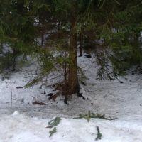 Lesné pozemky, Slovenské Pravno, 95672 m², Kompletná rekonštrukcia