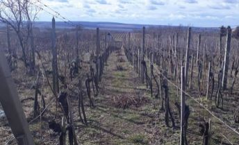 Ponúkame na predaj viničný domček s vinicou v Strekove.