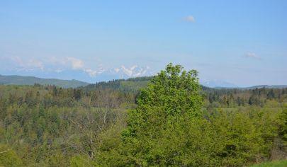 Krásny pozemok (8000m2) v obci Úloža okr. Levoča