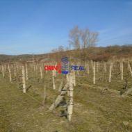 Obrábaný vinohrad 47 árov Modra, lokalita Šnavdy