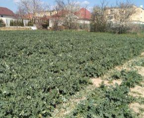 Predaj slnečného pozemku 646 m2 v Čeľaďiciach N074-14-MIK
