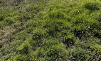 Pozemok o výmere 551m2 v obci Šurianky