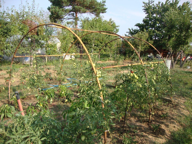 Záhrada-Predaj-Levice-35000.00 €