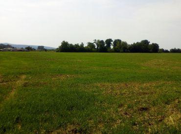 Exkluzívne - Predaj pozemku, Banka pri Piešťanoch