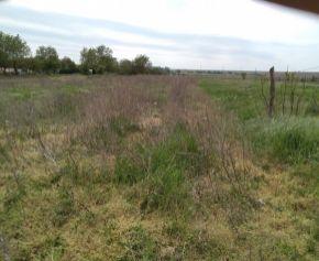 Predaj pozemku 4316 m2 v  Branči N078-14-MIK