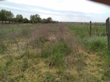 Predaj pozemku 4316 m2 v  Branči 78- 14- MIK