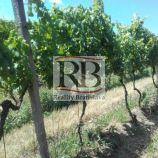 Na predaj pekný vinohrad v lokalite Svätý Jur, 2 649m2