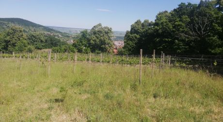 Kuchárek-real : Predaj rekreačného pozemku v Svätom Juri