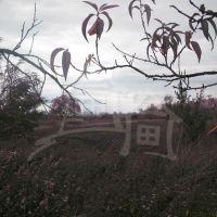 Záhrada, Jakubov, 2900 m², Pôvodný stav
