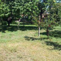 Záhrada, Lipová, 1238 m²