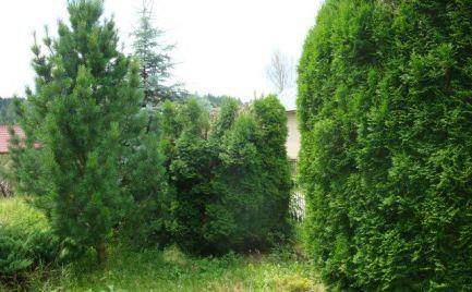 SUPER RD so záhradou v Brezne - Zadné Halny