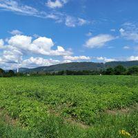 Poľnohospodárska pôda, Žilina, 1570 m²