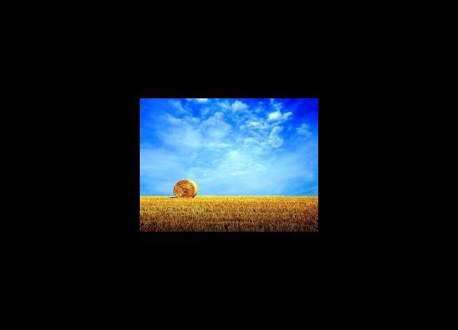 orná pôda - Pliešovce - Fotografia 1