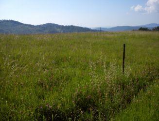 Dúbravy, Iviny – pozemok 2906 m2 – predaj