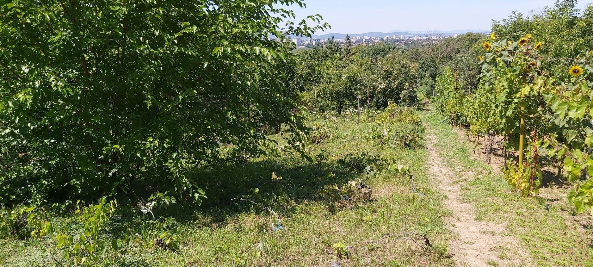 Záhrada-Predaj-Levice-13500.00 €