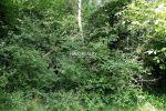 rekreačný pozemok - Janova Lehota - Fotografia 4