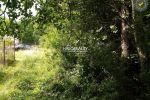 rekreačný pozemok - Janova Lehota - Fotografia 5