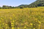 orná pôda - Žehňa - Fotografia 4