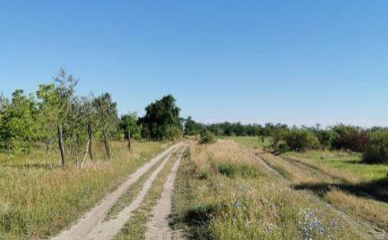 NA PREDAJ VEĽKÝ POZEMOK obec MILOSLAVOV časť ALŽBETIN DVOR