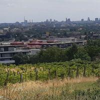 vinice, chmelnice