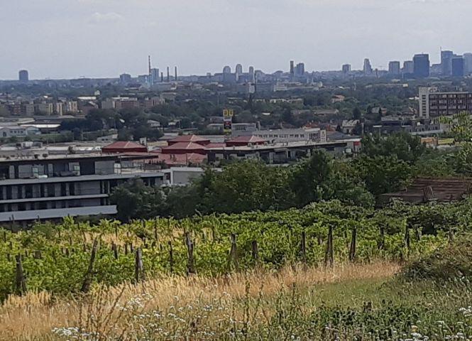 vinice, chmelnice - Bratislava-Rača - Fotografia 1