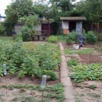 Záhrada, Senec, 388 m²