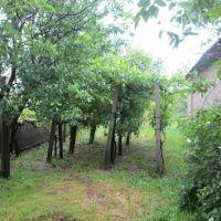 Záhrada, Dolné Orešany, 450 m², Pôvodný stav