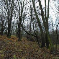 Lesné pozemky, Dolné Orešany, 1000 m²