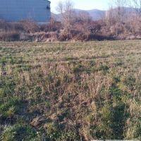 Poľnohospodárska pôda, Dolné Orešany, 5000 m²