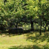 Záhrada, Stupava, 972 m², Pôvodný stav