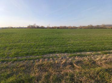 Rovinatý pozemok Štúrovo  4 481 m2 / 15 € - m2.
