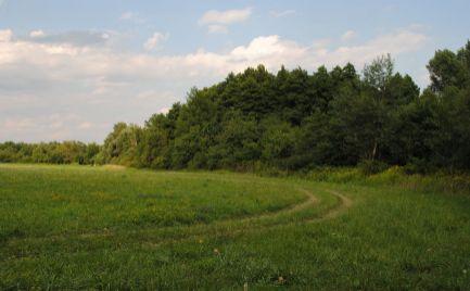 Rovinaté a slnečné pozemky vo Svätom Jure, v blízkosti zastavanej časti obce.