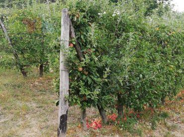 Štúrovo - Ovocný sad - záhrada s nádherným výhľadom.