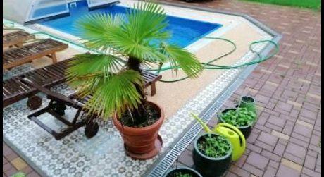 NASŤAHUJ SA! PREDAJ - Luxusný 5 izbový dom s bazénom v centre Komárna