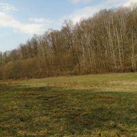 Lesné pozemky, Ružiná, 16888 m²