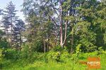 rekreačný pozemok - Pliešovce - Fotografia 13