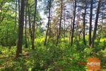rekreačný pozemok - Pliešovce - Fotografia 15