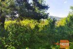 rekreačný pozemok - Pliešovce - Fotografia 18