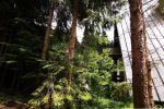 chata - Donovaly - Fotografia 9