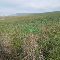 Orná pôda, Nitra, 5732 m²