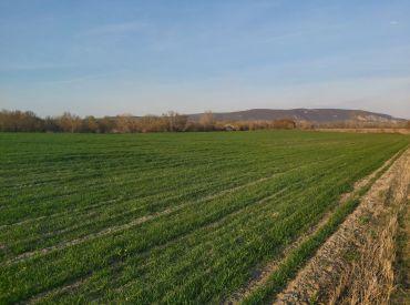 Štúrovo - Rovinatý pozemok 2 500 m2 - 15 €/m2