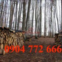 Lesné pozemky, Dúbravica, 80000 m², Pôvodný stav