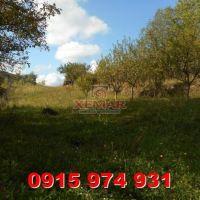 Záhrada, Temeš, 1382 m², Pôvodný stav