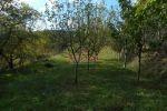záhrada - Temeš - Fotografia 2