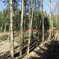 Lesné pozemky, Zvolenská Slatina, 22511 m², Pôvodný stav